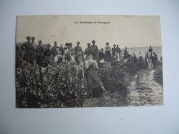 Gros Plan Vendanges En Bourgogne - Autres Communes