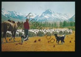 New Zealand - Sheep Farmer [AA26 1.371 - Nuova Zelanda
