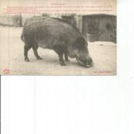 10-CUNFIN MADEMOISELLE FINETTE - Francia