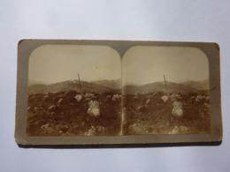 """Fotografia Stereoscopica """"L'ULTIMA NEVE SUL MONTE FIGOGNA ( M. 817 ) Aprile 1906"""" - Stereoscopio"""
