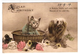 Chat Et Chien -cat And Dog  -poesje En Hond -katze Hund - Katten