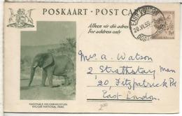 SUDAFRICA EAST LONDON 1955 ENTERO POSTAL ELEFANTE ELEPHANT KRUGER NATIONAL PARK - Elefantes