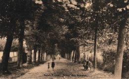 Saint-Trond Allée Des Soupirs - Sint-Truiden