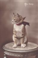 Cat Card    -   On Duty !!. - Katten