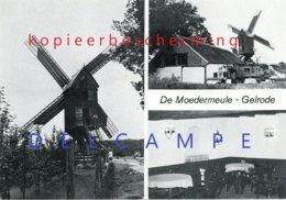 GELRODE - Aarschot (Vlaams-Brabant) - Molen/moulin - De Moedermeule In Werking, Kort Na De Restauratie Van 1976 - Aarschot