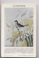 LA FAUVETTE - Gravure - Illustration Signée Gaston Pierre GALEY - Collection Naturaliste Buisson - Oiseaux