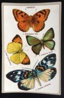 Asie Papillon Compagnie Française SCHAAL Jolie Chromo - Altri