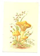 PILZE / Mushrooms / Champignons / Funghi, Hygrophorus Lypo Thejus - Pilze