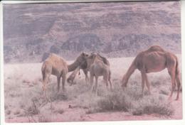 Wadi Run , Jordan - Giordania