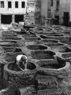 Photo Maroc Quartier Des Tanneurs à Fès Vivant Univers Années 1990 - Afrique