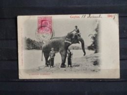 F15 - Ceylon - A Ceylon Elephant - Colombo - 1905 - Sri Lanka (Ceylon)