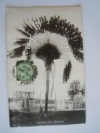 Malaya Malaisie Singapore Traveling Tree L'arbre Du Voyageur Used 1937 Stamp Negri Sembilan Yv 21 - Malesia