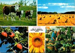 Canada Manitoba MacGregor Agricultural Scenes - Other
