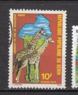Bénin, Girafe, Giraffe - Giraffes