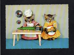 Animal / Chat,chats Habillés /  En Cuisine Le Cuisinier Et La Cuisinière Prépare Le Gâteau - Dressed Animals