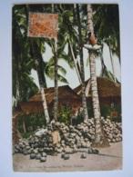 Malay Malaya Malaisie Coconuts Plantation By Malaya Natives Used 1935 Stamp Tiger 4c  Yv 58 - Malaysia