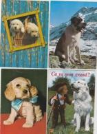19 //11 /  164. -  LOT  DE. 100  C P M  DE. CHIENS  DIVERS  À. 8 €  PLUS  6€,50. DE. PORT. - Postkaarten