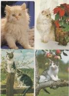 19 / 11 / 165  -  LOT  DE  200. C P M  DE. CHATS  DIVERS. À  15€  PLUS  8 €  DE. PORT - Postkaarten