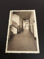 Beernem : Sint-Amandusgesticht, Broeders Van Liefde : Ziekenhuis H. Maria   - Foto J. Buyens - Beernem