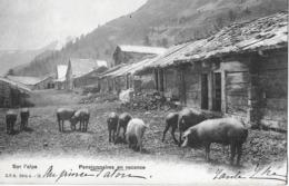 AUF DER ALP / SUR L'ALPE → Pensionnaires En Vacanve, Schweine Auf Der Alp Anno  1905 - Sin Clasificación