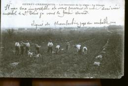 GEVREY CHAMBERTIN LE BINAGE - Gevrey Chambertin