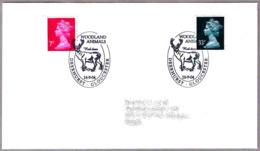 CIERVO ROJO - RED DEER. Cervus Elaphus. Deerhurst 2004 - Animalez De Caza