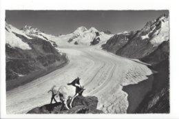 22717 - Eggishorn Jungfrau Eiger Mönch Aletschgletscher Chèvres - BE Berne