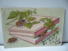 HANNETONS CPA - Insekten