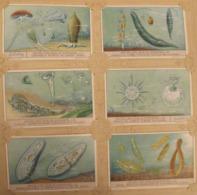 6 Chromo Liebig : Gouttes D'eau Sous Le Microscope. 1931. S 1244 - Liebig