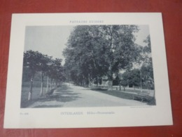 Phototypie Paysages Suisses Suisse  Circa 1900 INTERLAKEN HOCHE PROMENADE - Fotos