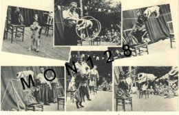 SPECTACLE DE CIRQUE A IDENTIFIER - CHIENS - Cirque