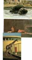 3 GRANBY, Quebec, Canada, Granby Zoo, 3 Different Animals, Old Chrome Postcards - Granby