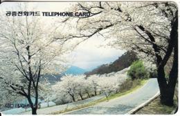 SOUTH KOREA - Cherry Bossoms In Hoagaesibri In Handong/Busan(W3000), 05/95, Used - Corée Du Sud