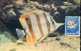 48941 Singapore, Maximum  Exotic Fish  Poisson, 1962 On Circuled Card From Singapore To France - Singapore (1959-...)