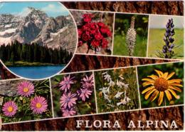 Flora Alpina. VG. - Fiori