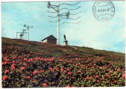 Monesi (Im). I Rododendri Del Plateau. Skylift. VG. - Imperia