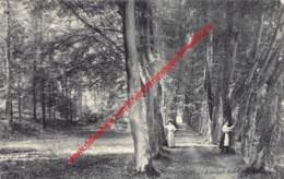 Avenue Des Charmes - Tervuren Tervueren - Tervuren