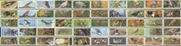 Cigarette Cards Greatbritain British Birds (Black Cat) Full Set, 50v. - Autres Collections