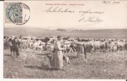 55 Environs Bar Le Duc Bergere Lorraine Troupeau Moutons Et Chevres Goat Chien Berger - Bar Le Duc