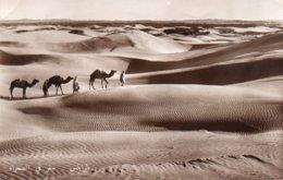TRIPOLI-ORIENTAZIONE NEL DESERTO-1952-REAL PHOTO - Libia