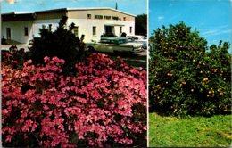 Florida Bradenton Mixon Fruit Farms - Bradenton