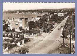 83 - SAINT CYR Sur MER - LES LECQUES - Boulevard Des Pins - Voitures Anciennes - Frassati Tabac Non Circulée - 2 Scans - - Saint-Cyr-sur-Mer