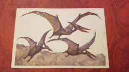 Pteranodon / Pterosaurs   - Dinosaur Serie - Old USSR Postcard 1969 - Altri