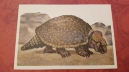 Heavily Armored Armadillo - Glyptodont  - Rare Old Soviet Dinosaur Serie - Old USSR Postcard 1969 - Altri