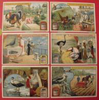 6 Chromo Liebig : Oiseaux. 1904. S 799. Chromos - Liebig