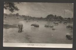 VIETNAM  Canh Dong Quê - Paysage De Campagne - Country Landscape - Buffles à La Baignade / Circulée En Juil 1959 - Viêt-Nam