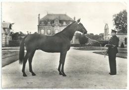 Animaux - Cheval - Trotteur élevage Français - Publicité Soufrane - Horses