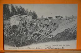 Vacherie Dans Les Alpes - Unclassified