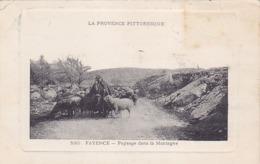Cpa- 83-fayence-animée( Patre Avec Ses Moutons) Paysage Dans La Montagne-edi Bacchi N°530 - Fayence