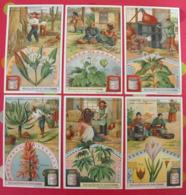 6 Chromo Liebig : Plantes Médicinales. 1907. S 906. Chromos - Liebig